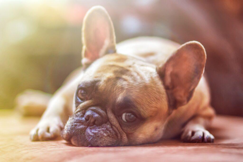 BullerBox har enorm succes med kæledyrsabonnementsforretning